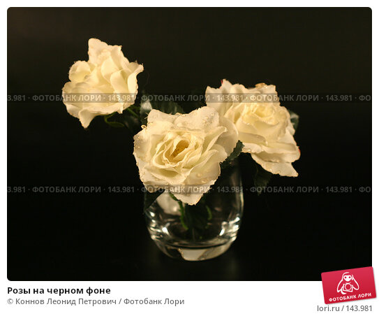 Розы на черном фоне, фото № 143981, снято 10 декабря 2007 г. (c) Коннов Леонид Петрович / Фотобанк Лори