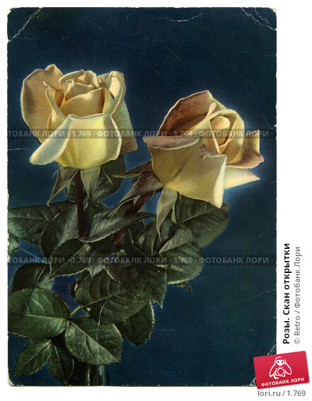 Розы. Скан открытки, фото № 1769, снято 26 апреля 2017 г. (c) Retro / Фотобанк Лори
