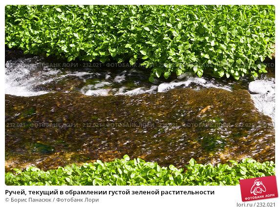 Купить «Ручей, текущий в обрамлении густой зеленой растительности», фото № 232021, снято 22 марта 2008 г. (c) Борис Панасюк / Фотобанк Лори