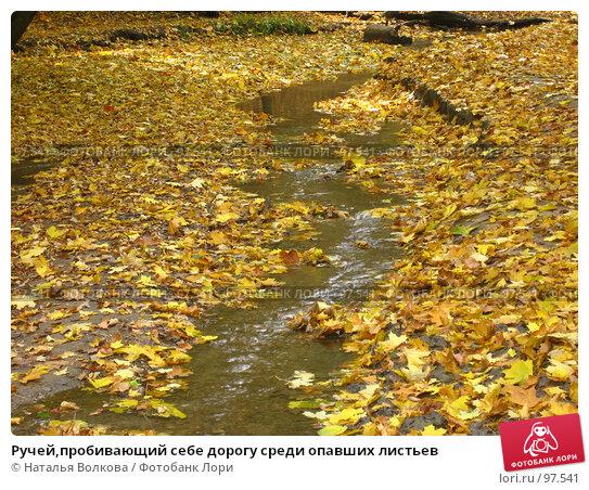 Ручей,пробивающий себе дорогу среди опавших листьев, фото № 97541, снято 3 октября 2007 г. (c) Наталья Волкова / Фотобанк Лори