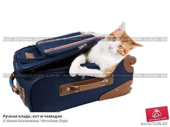 Ручная кладь: кот и чемодан. Стоковое фото, фотограф Ирина Кожемякина / Фотобанк Лори