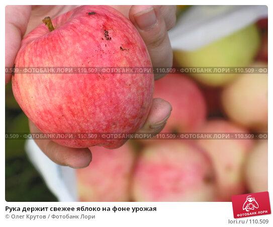 Рука держит свежее яблоко на фоне урожая, фото № 110509, снято 25 февраля 2017 г. (c) Олег Крутов / Фотобанк Лори