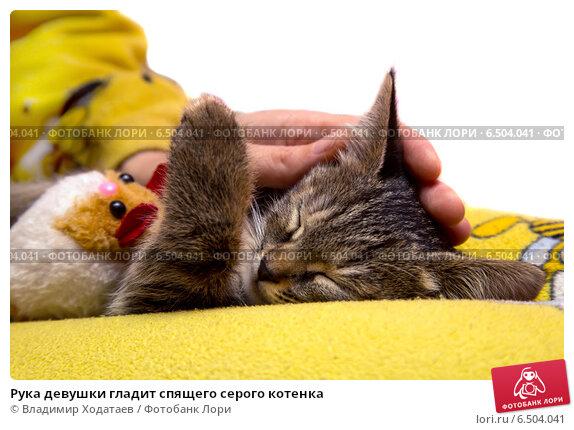 Купить «Рука девушки гладит спящего серого котенка», фото № 6504041, снято 1 октября 2014 г. (c) Владимир Ходатаев / Фотобанк Лори