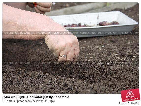 Рука женщины, сажающей лук в землю, фото № 190081, снято 27 мая 2007 г. (c) Галина Ермолаева / Фотобанк Лори