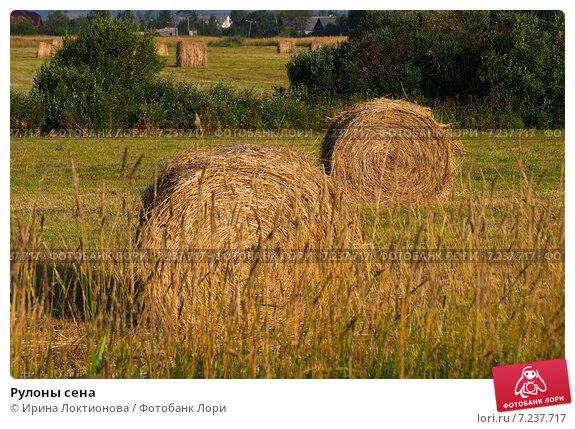 Рулоны сена. Стоковое фото, фотограф Ирина Локтионова / Фотобанк Лори