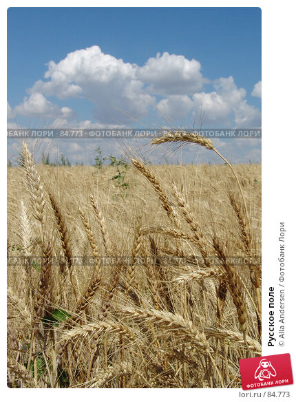 Русское поле, фото № 84773, снято 5 июля 2006 г. (c) Alla Andersen / Фотобанк Лори