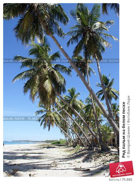 Ряд пальм на белом песке, фото № 75885, снято 31 мая 2007 г. (c) Валерий Шанин / Фотобанк Лори