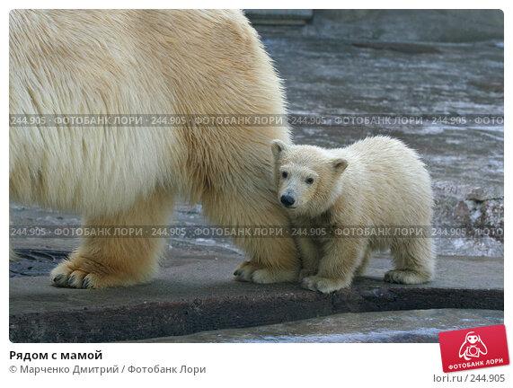 Купить «Рядом с мамой», фото № 244905, снято 22 марта 2008 г. (c) Марченко Дмитрий / Фотобанк Лори