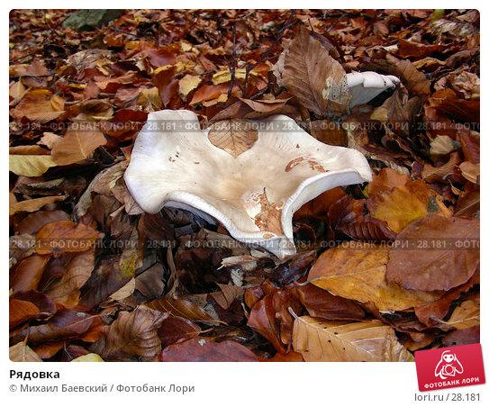 Рядовка, фото № 28181, снято 28 октября 2006 г. (c) Михаил Баевский / Фотобанк Лори