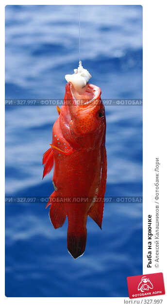Рыба на крючке, фото № 327997, снято 10 июня 2008 г. (c) Алексей Калашников / Фотобанк Лори