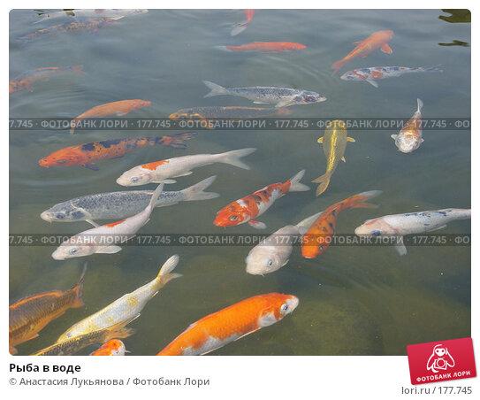 Купить «Рыба в воде», фото № 177745, снято 22 ноября 2007 г. (c) Анастасия Лукьянова / Фотобанк Лори