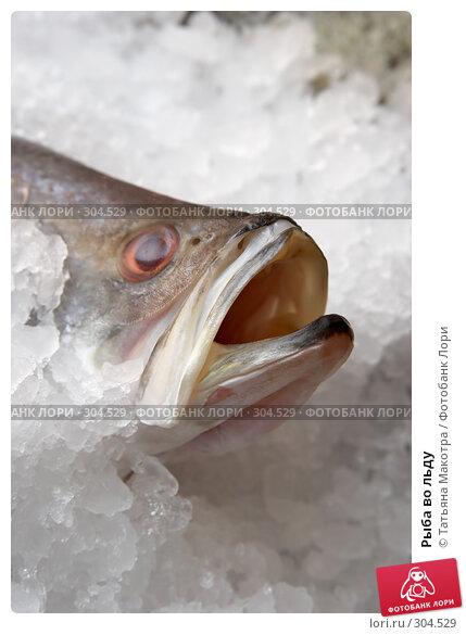 Рыба во льду, фото № 304529, снято 17 мая 2008 г. (c) Татьяна Макотра / Фотобанк Лори