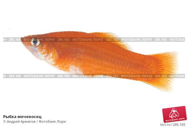 Рыбка меченосец, фото № 285165, снято 19 марта 2007 г. (c) Андрей Армягов / Фотобанк Лори