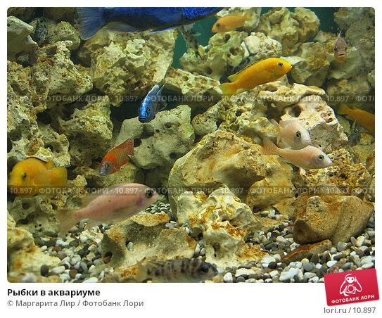 Рыбки в аквариуме, фото № 10897, снято 5 мая 2006 г. (c) Маргарита Лир / Фотобанк Лори