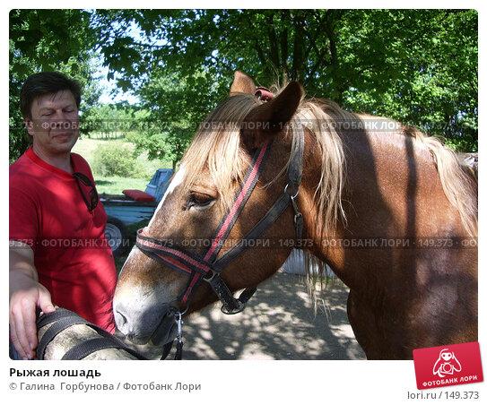 Рыжая лошадь, фото № 149373, снято 18 мая 2006 г. (c) Галина  Горбунова / Фотобанк Лори