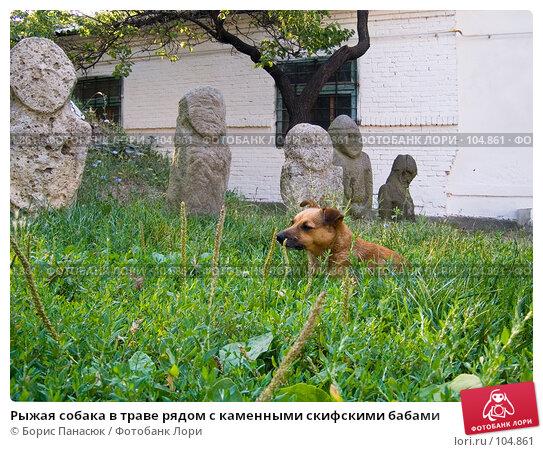 Купить «Рыжая собака в траве рядом с каменными скифскими бабами», фото № 104861, снято 24 апреля 2018 г. (c) Борис Панасюк / Фотобанк Лори