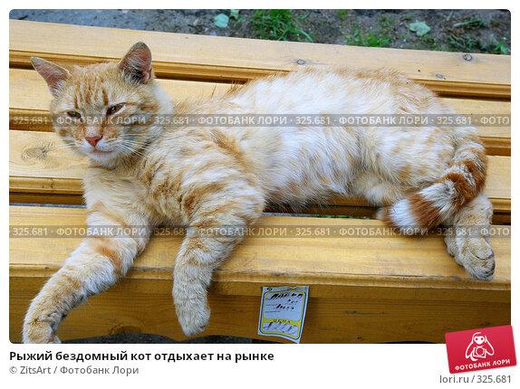 Рыжий бездомный кот отдыхает на рынке, фото № 325681, снято 12 июня 2008 г. (c) ZitsArt / Фотобанк Лори
