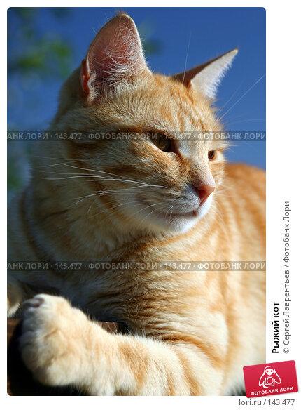 Рыжий кот, фото № 143477, снято 11 августа 2004 г. (c) Сергей Лаврентьев / Фотобанк Лори
