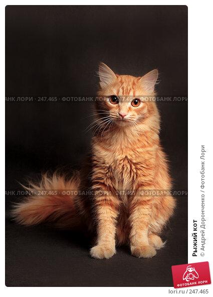 Рыжий кот, фото № 247465, снято 27 июля 2017 г. (c) Андрей Доронченко / Фотобанк Лори