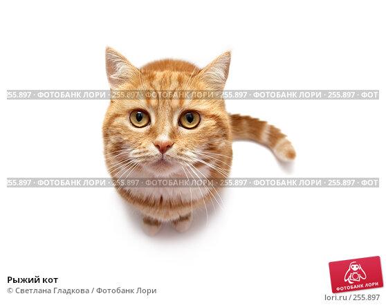 Купить «Рыжий кот», фото № 255897, снято 8 апреля 2008 г. (c) Cветлана Гладкова / Фотобанк Лори