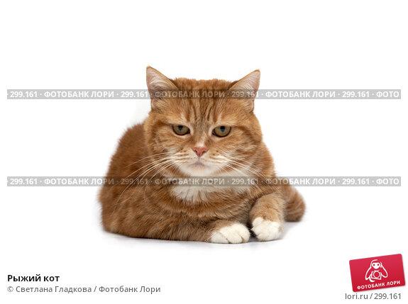 Рыжий кот, фото № 299161, снято 10 марта 2008 г. (c) Cветлана Гладкова / Фотобанк Лори