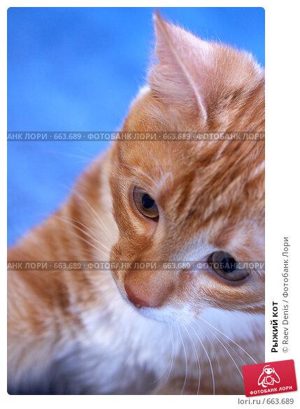 Рыжий кот, фото № 663689, снято 24 февраля 2008 г. (c) Raev Denis / Фотобанк Лори