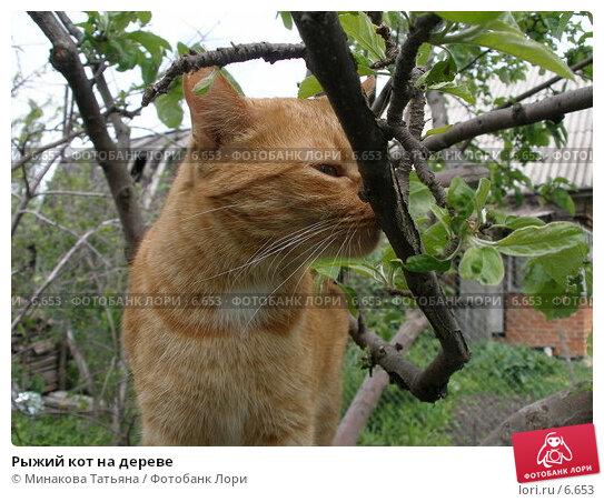 Купить «Рыжий кот на дереве», фото № 6653, снято 28 мая 2006 г. (c) Минакова Татьяна / Фотобанк Лори