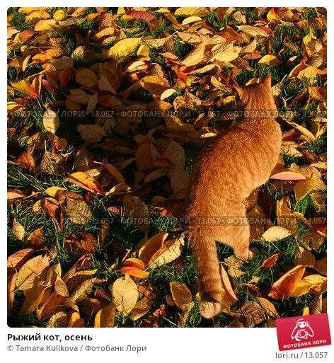 Купить «Рыжий кот, осень», фото № 13057, снято 18 ноября 2006 г. (c) Tamara Kulikova / Фотобанк Лори