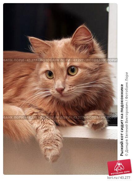 Рыжий кот сидит на подоконнике, фото № 43277, снято 29 марта 2007 г. (c) Донцов Евгений Викторович / Фотобанк Лори