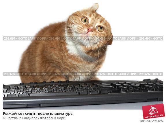 Рыжий кот сидит возле клавиатуры, фото № 295697, снято 20 апреля 2008 г. (c) Cветлана Гладкова / Фотобанк Лори