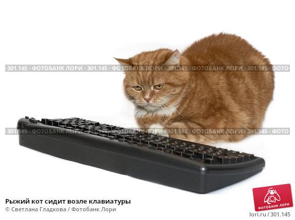 Рыжий кот сидит возле клавиатуры, фото № 301145, снято 20 апреля 2008 г. (c) Cветлана Гладкова / Фотобанк Лори