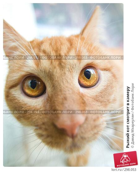 Рыжий кот смотрит в камеру, фото № 298053, снято 12 мая 2008 г. (c) Давид Мзареулян / Фотобанк Лори