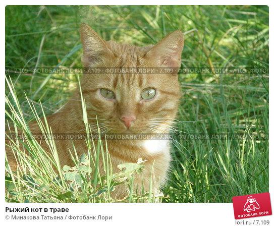 Рыжий кот в траве, фото № 7109, снято 30 июля 2005 г. (c) Минакова Татьяна / Фотобанк Лори