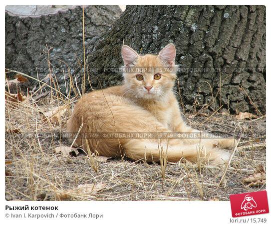 Рыжий котенок, фото № 15749, снято 30 сентября 2006 г. (c) Ivan I. Karpovich / Фотобанк Лори