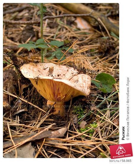 Рыжик, фото № 58065, снято 13 августа 2006 г. (c) Вячеслав Потапов / Фотобанк Лори