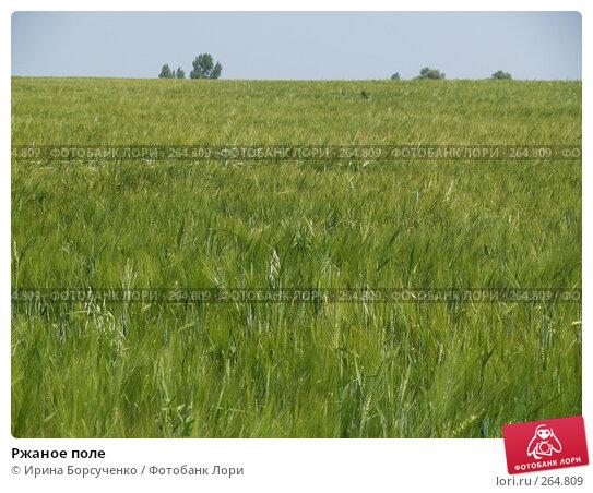 Ржаное поле, фото № 264809, снято 17 июня 2007 г. (c) Ирина Борсученко / Фотобанк Лори