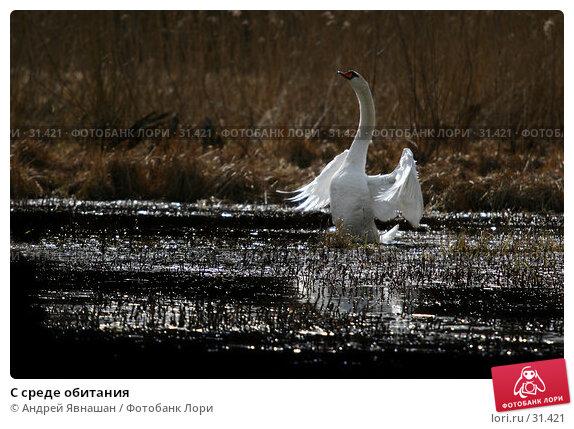 С среде обитания, фото № 31421, снято 7 апреля 2007 г. (c) Андрей Явнашан / Фотобанк Лори