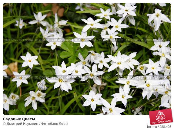 Садовые цветы, эксклюзивное фото № 288405, снято 22 апреля 2008 г. (c) NDfoto / Фотобанк Лори