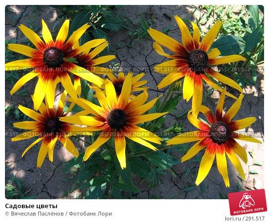 Садовые цветы, фото № 291517, снято 12 июля 2007 г. (c) Вячеслав Паслёнов / Фотобанк Лори