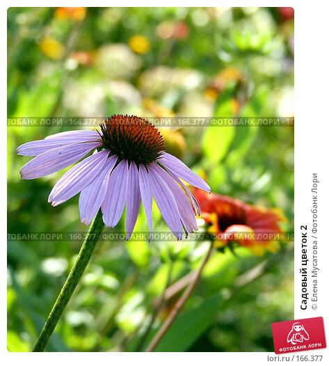 Купить «Садовый цветок 2», фото № 166377, снято 6 августа 2005 г. (c) Елена Мусатова / Фотобанк Лори