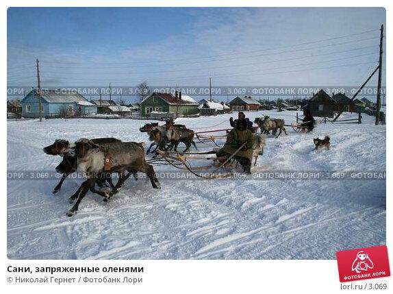 Сани, запряженные оленями, фото № 3069, снято 25 марта 2006 г. (c) Николай Гернет / Фотобанк Лори