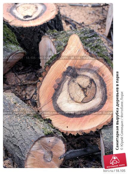 Купить «Санитарная вырубка деревьев в парке», фото № 18105, снято 13 января 2007 г. (c) Юрий Синицын / Фотобанк Лори