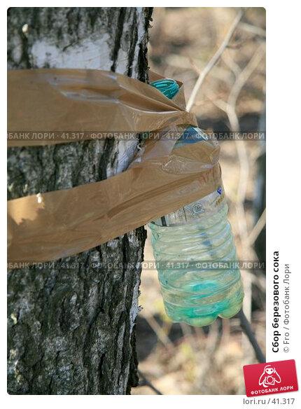 Сбор березового сока, фото № 41317, снято 14 апреля 2007 г. (c) Fro / Фотобанк Лори