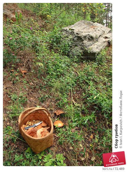 Купить «Сбор грибов», фото № 72489, снято 4 августа 2007 г. (c) Ivan I. Karpovich / Фотобанк Лори