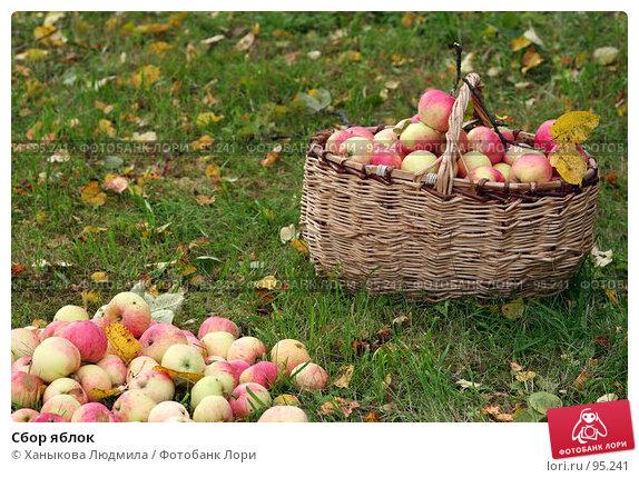 Сбор яблок, фото № 95241, снято 22 сентября 2007 г. (c) Ханыкова Людмила / Фотобанк Лори