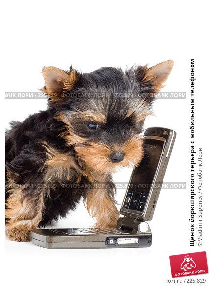 Щенок йоркширского терьера с мобильным телефоном, фото № 225829, снято 30 августа 2007 г. (c) Vladimir Suponev / Фотобанк Лори