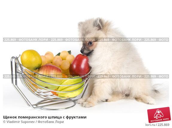 Щенок померанского шпица с фруктами, фото № 225869, снято 17 ноября 2007 г. (c) Vladimir Suponev / Фотобанк Лори