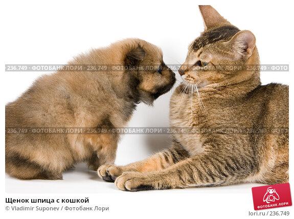 Щенок шпица с кошкой, фото № 236749, снято 9 марта 2008 г. (c) Vladimir Suponev / Фотобанк Лори
