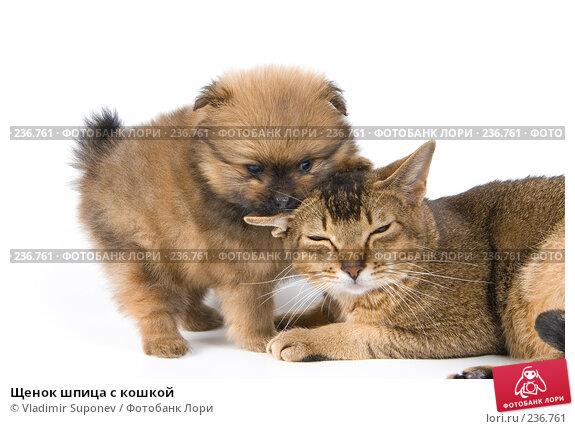 Щенок шпица с кошкой, фото № 236761, снято 16 марта 2008 г. (c) Vladimir Suponev / Фотобанк Лори
