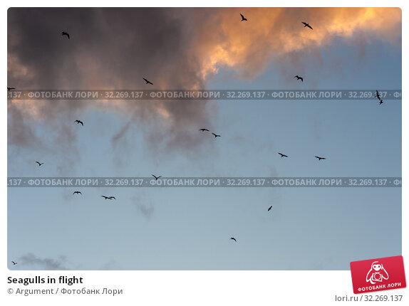 Купить «Seagulls in flight», фото № 32269137, снято 5 сентября 2012 г. (c) Argument / Фотобанк Лори